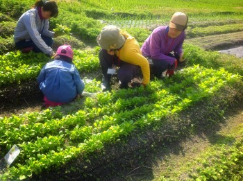 農業体験HP写真2